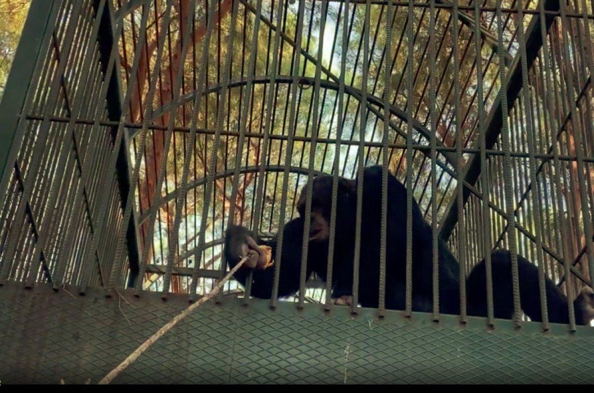 Antalya da otel çalışanına maymun saldırdı #3