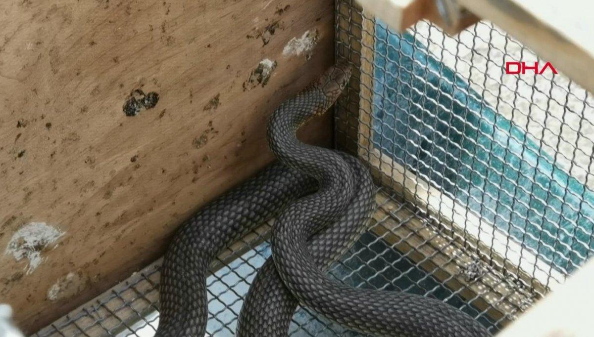 Bursa da 2 metrelik yılanı eliyle yakaladı #2