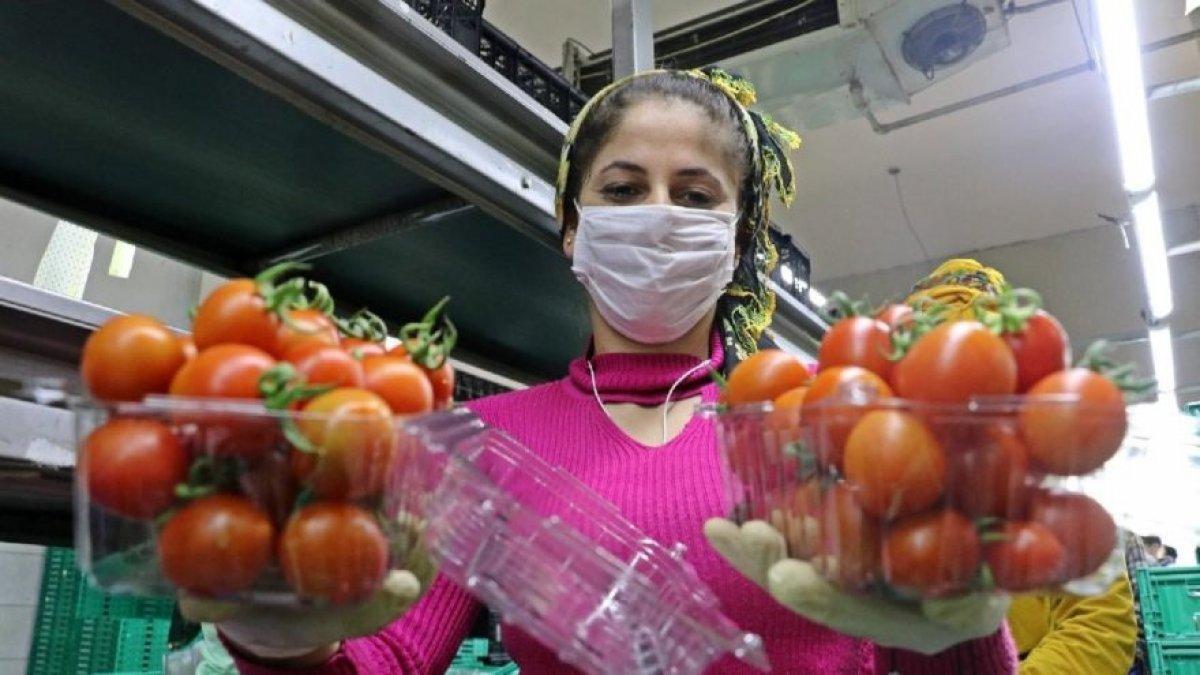 Rusya, Türkiye den aldığı domatesin kotasını artırdı #3