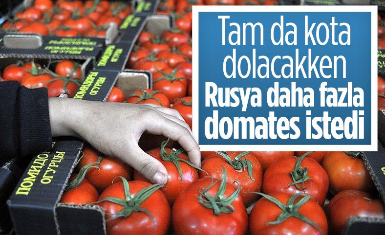 Rusya, Türkiye'den aldığı domatesin kotasını artırdı