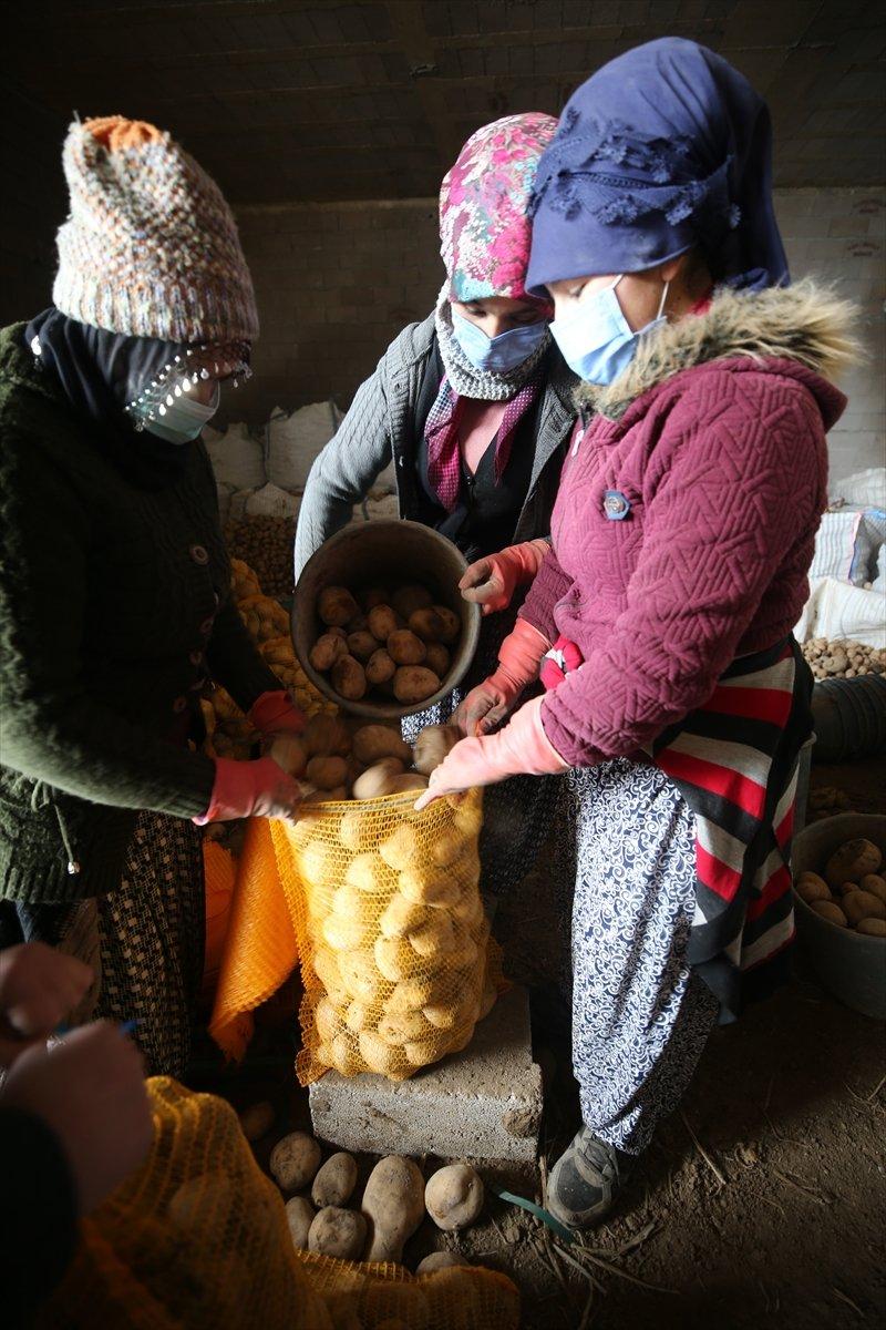 Cumhurbaşkanı Erdoğan ın talimatıyla çiftçiden alınacak ürünler ücretsiz dağıtılacak #5