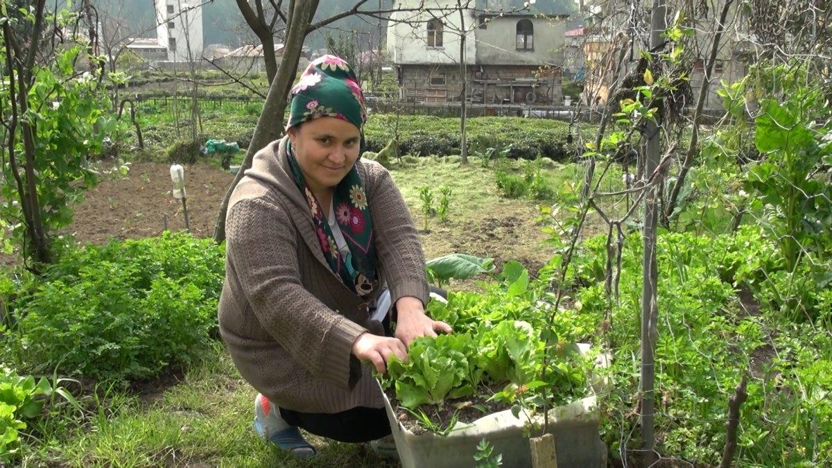 Doğu Karadeniz'de çay işçisi göçü başladı, uyarı geldi #4