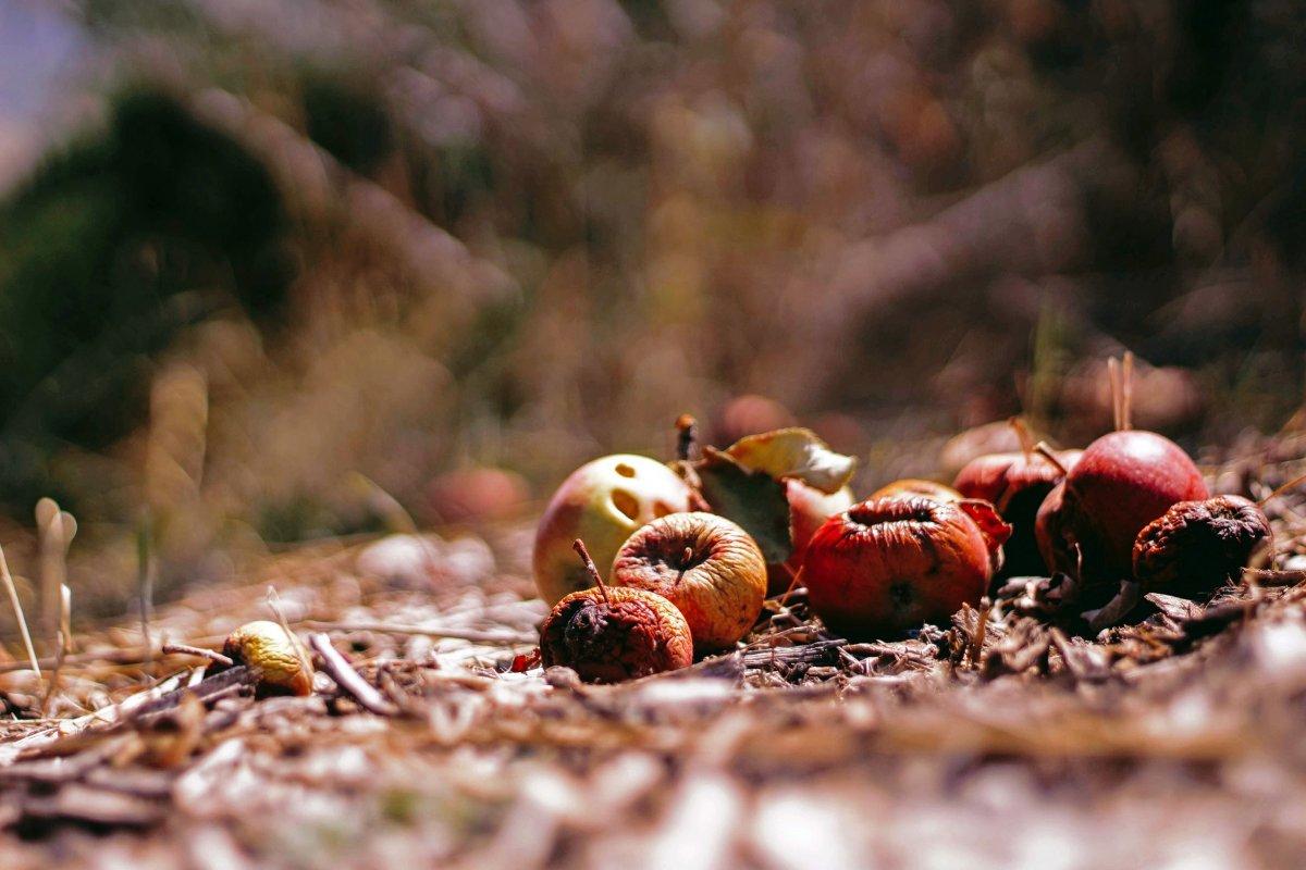 Türkiye'de her yıl 18,8 milyon ton gıda çöpe gidiyor  #2