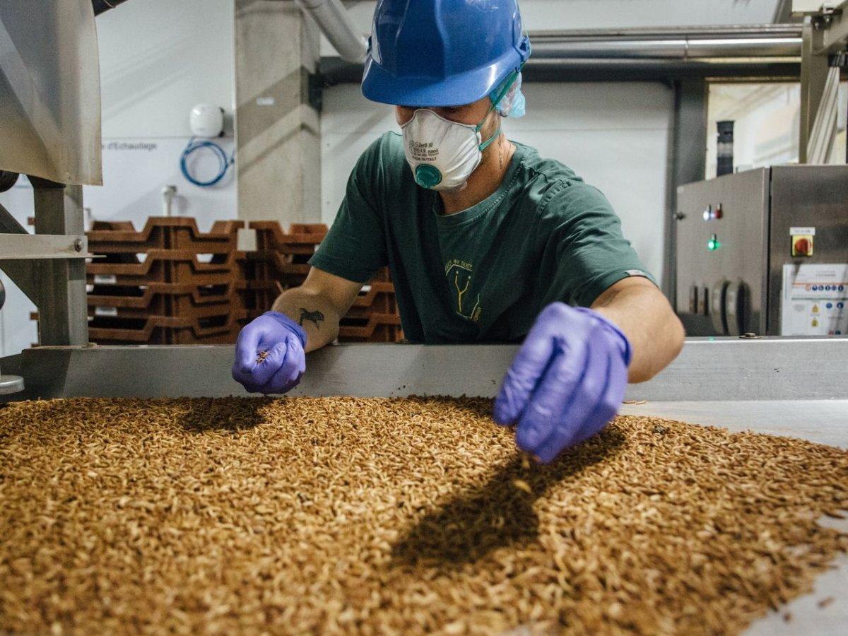 Avrupa Birliği, böcek larvasını gıda olarak onayladı #3