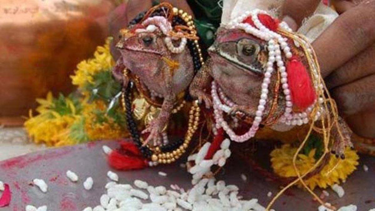 Hindistan'da, yağmurların artması için kurbağalar evlendirildi Hindistan_3142
