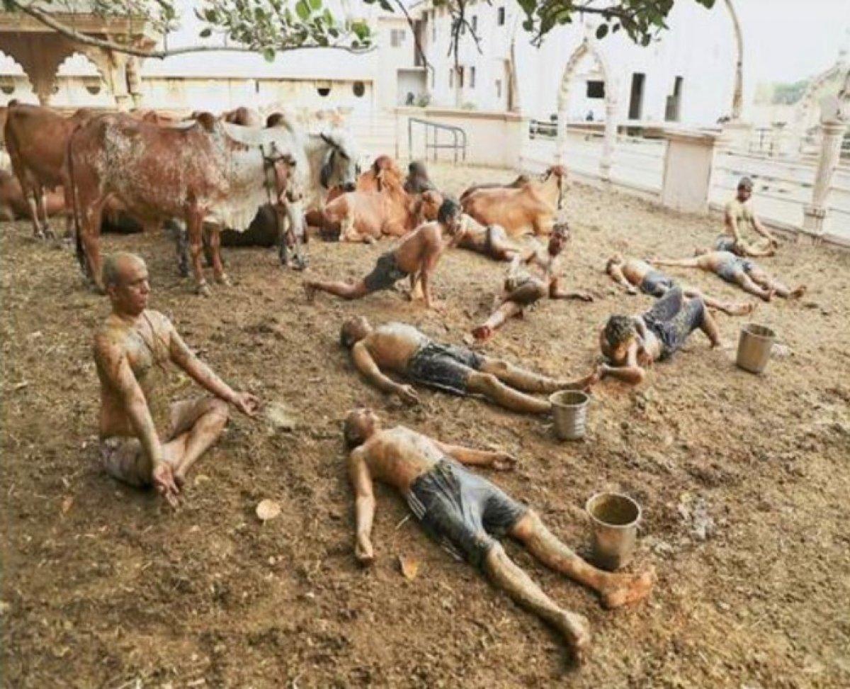 Hindistan da inek idrarı ve dışkısı ilaç olarak kullanılıyor #3