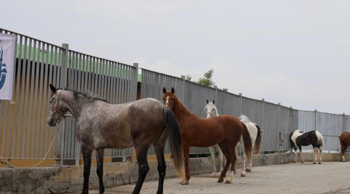 Ekrem İmamoğlu nun Adalar daki atlara ilişkin iddialarını yalanlama #2