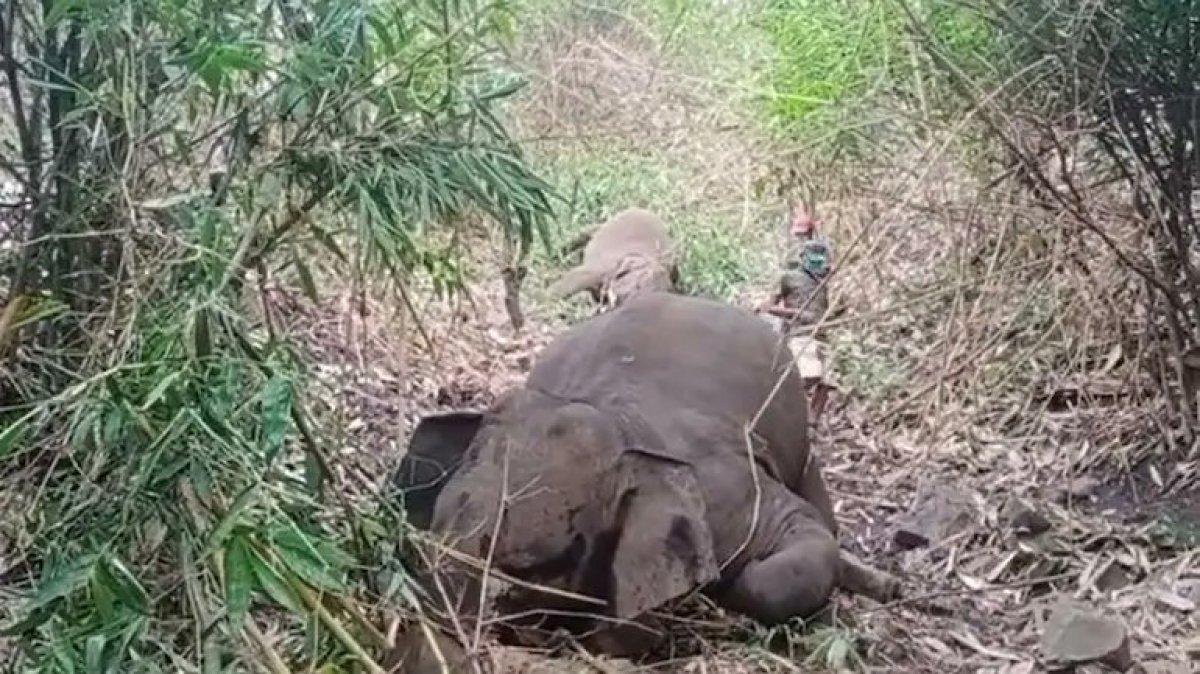 Hindistan da yıldırım düşmesinin ardından 18 fil ölü bulundu #2