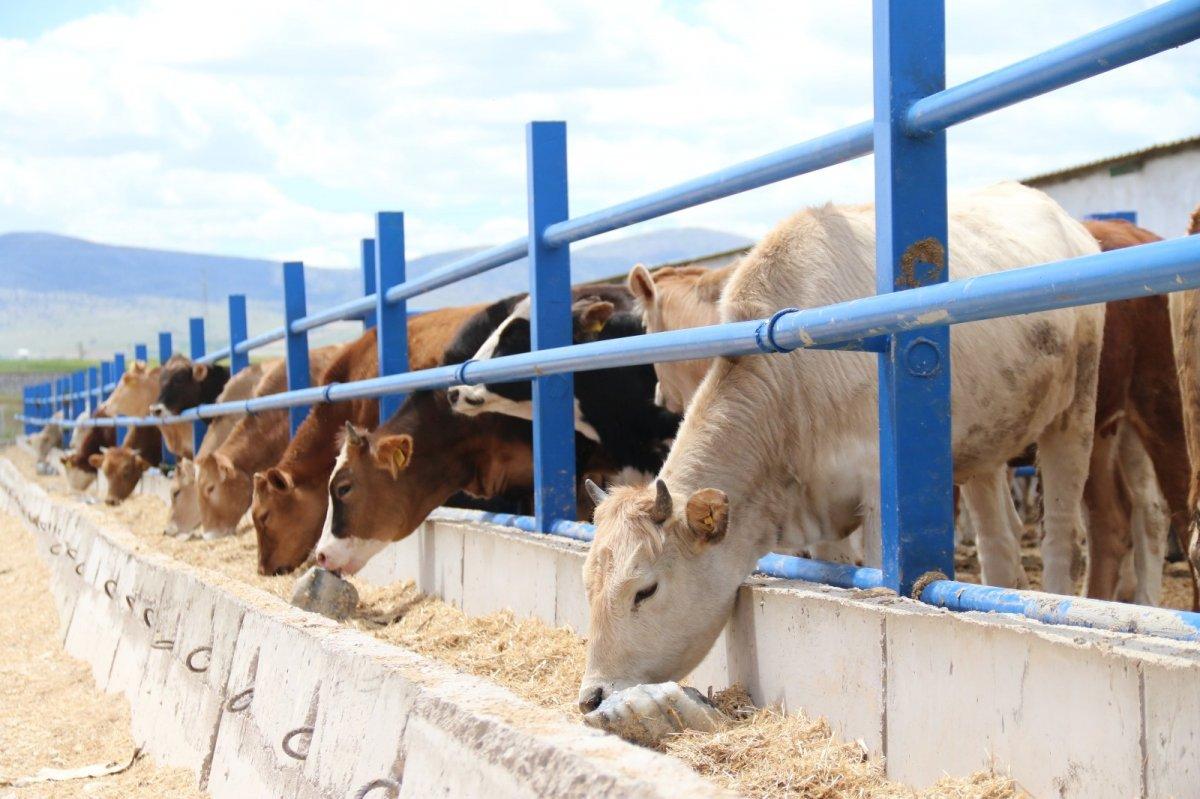 Hayvan besicileri: Kurbanlık fiyatları bu yıl değişmeyecek #2