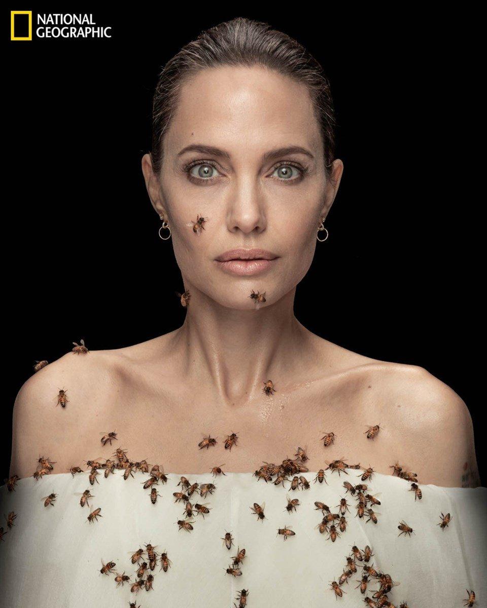Angelina Jolie, arıların önemini anlatmak için objektif karşısına geçti  #2
