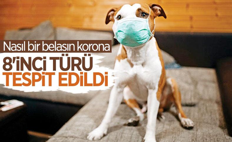 Malezya'da köpekten insana geçebilen koronavirüs türü bulundu