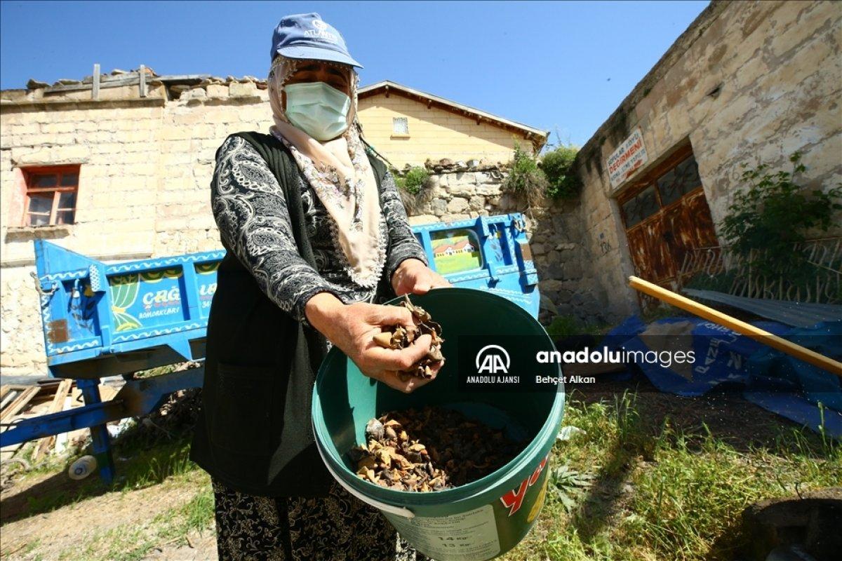 Nevşehir de bitkilerle boyadığı iplerle kilim yapıyor #1