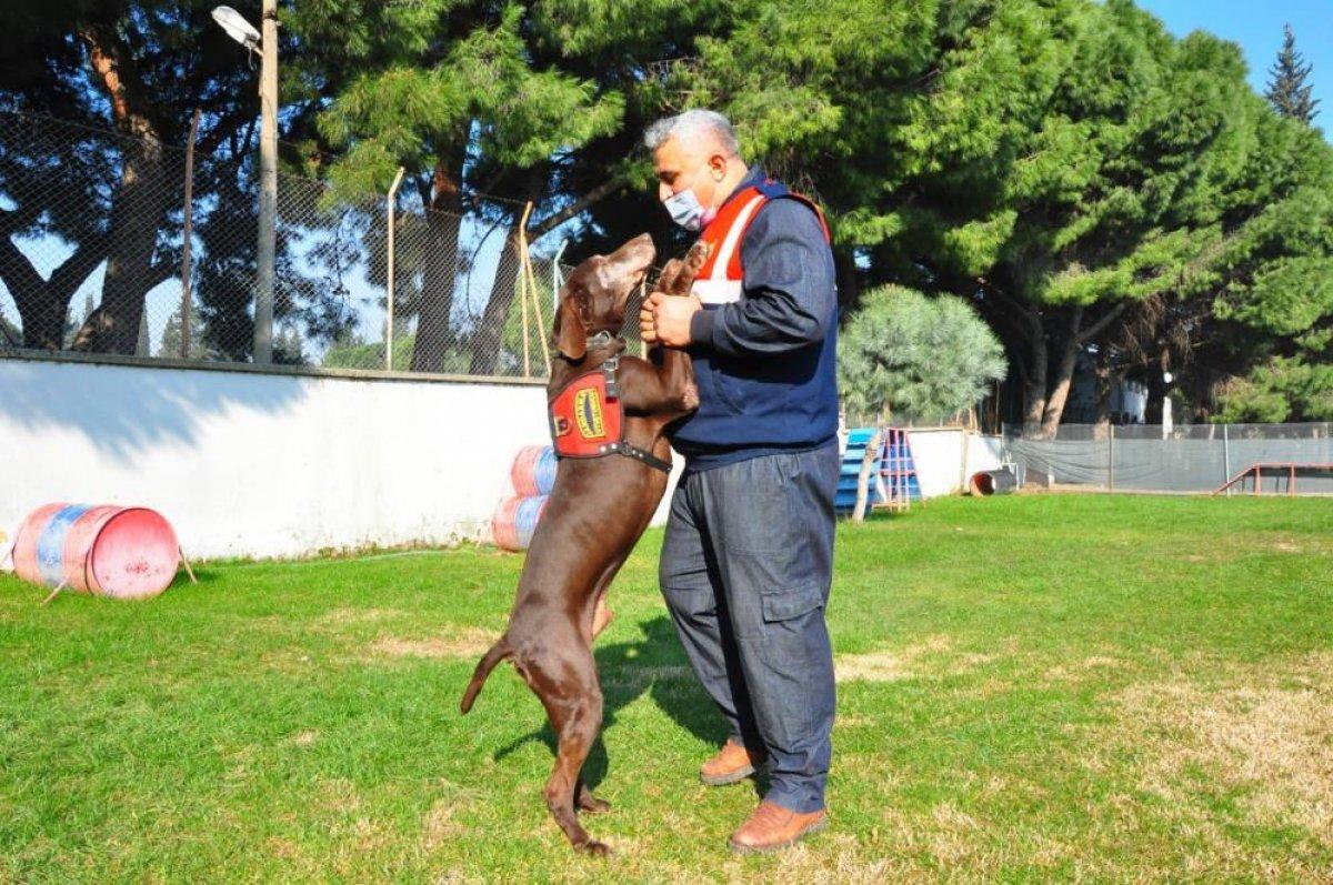 Manisa da narkotik köpeği Volta emekli oldu #2