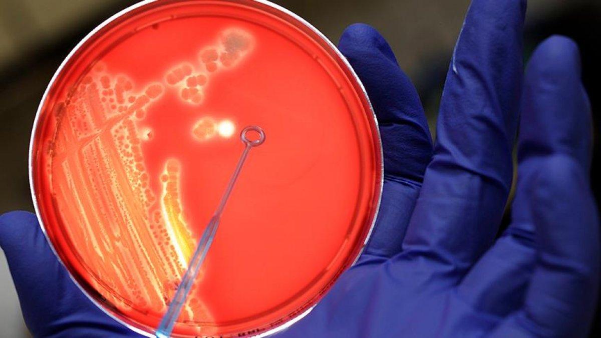 bagirsak mikrobiyotasi covid 19un siddetini etkiliyor 8695
