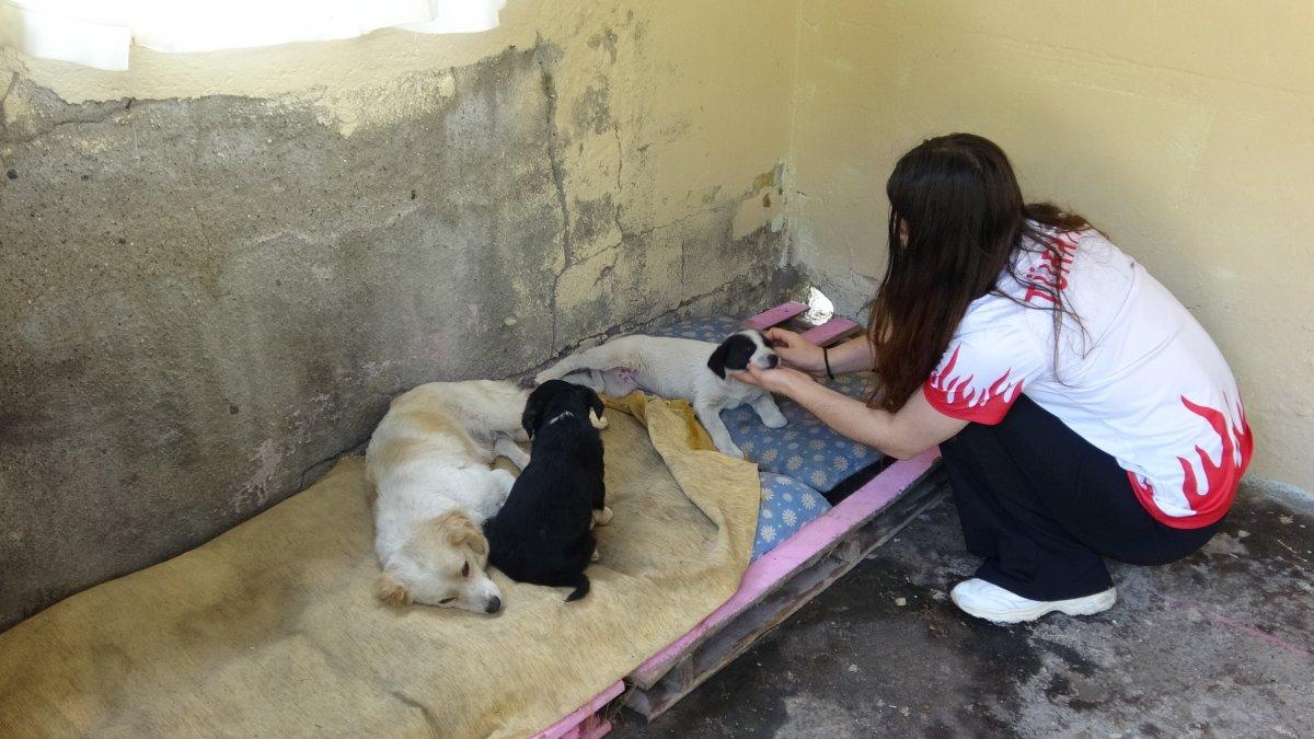 Zonguldak ta üniversite öğrencisi sokak hayvanları için kulübe yaptı #2