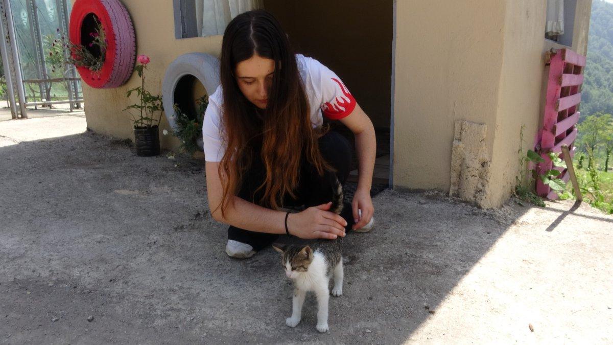 Zonguldak ta üniversite öğrencisi sokak hayvanları için kulübe yaptı #3