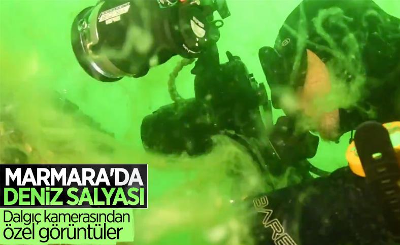 Deniz salyasıyla kaplanan Marmara Denizi'nin dibi görüntülendi