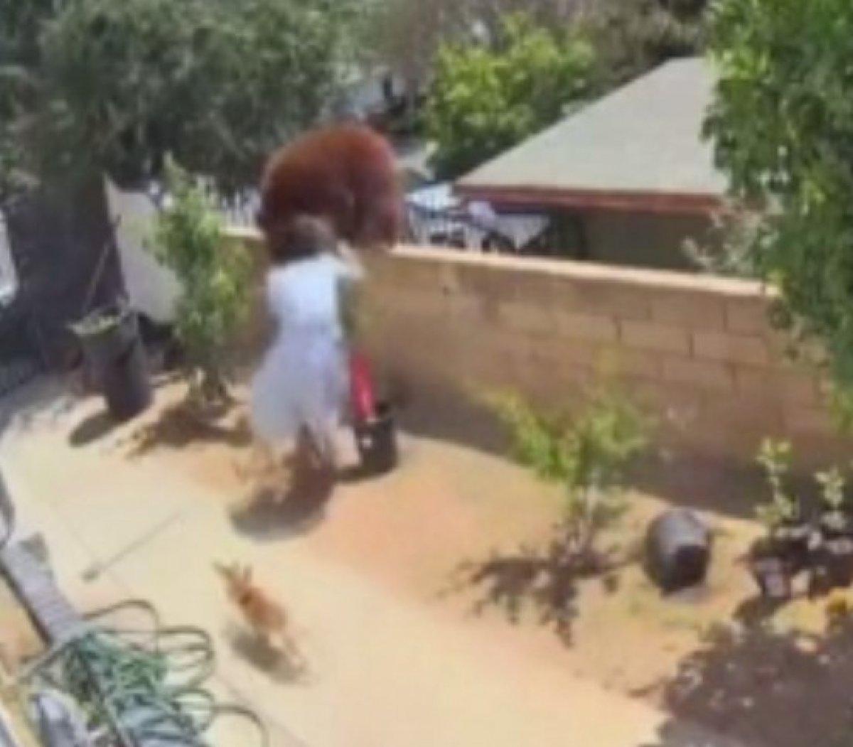 ABD'de bir kadın köpeklerini kurtarmak için ayıyı iteledi  #1