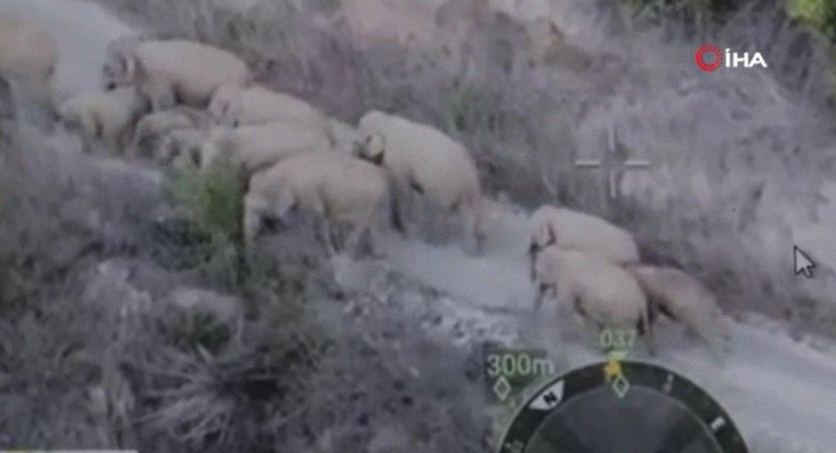Çin'de filler şehir merkezine indi, yollar kapatıldı  #2