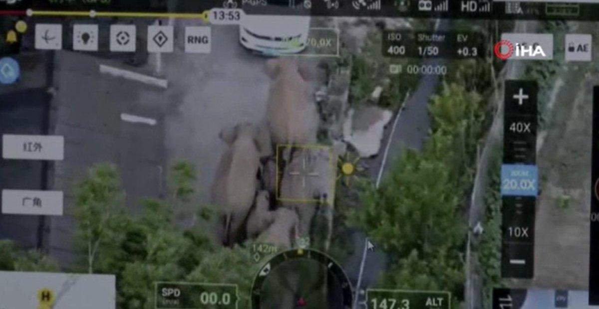 Çin'de filler şehir merkezine indi, yollar kapatıldı  #3