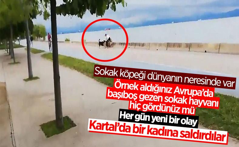 İstanbul'da sokak köpekleri bir kadına saldırdı