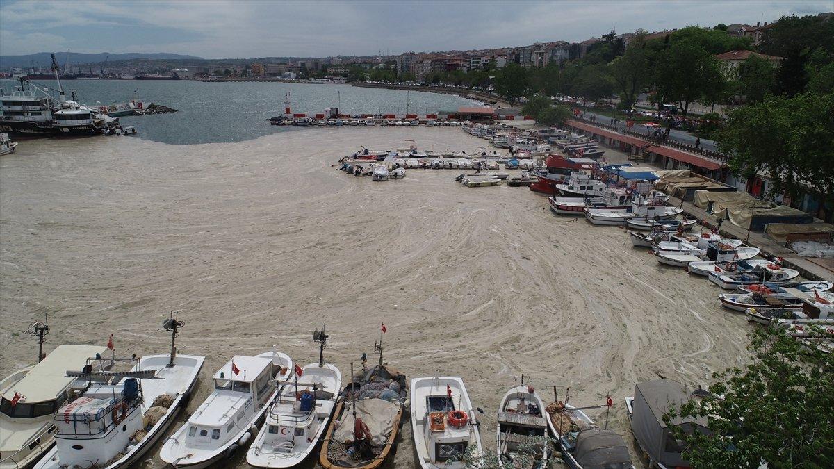 Deniz salyası oluşumunun Marmara Denizi ne etkileri araştırılıyor #1