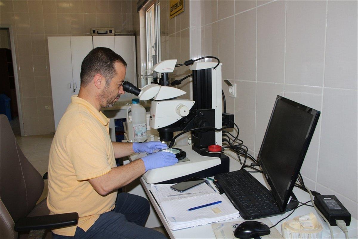 Deniz salyası oluşumunun Marmara Denizi ne etkileri araştırılıyor #3