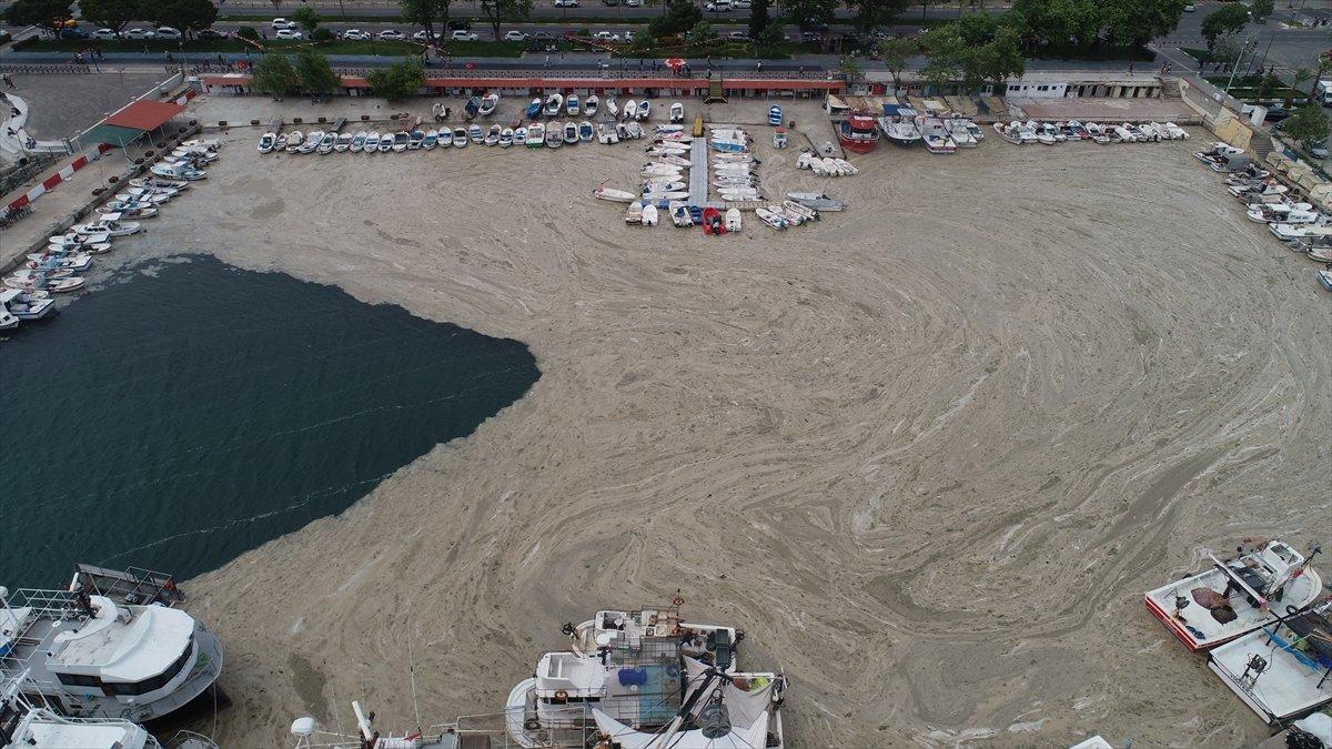 Deniz salyası oluşumunun Marmara Denizi ne etkileri araştırılıyor #4