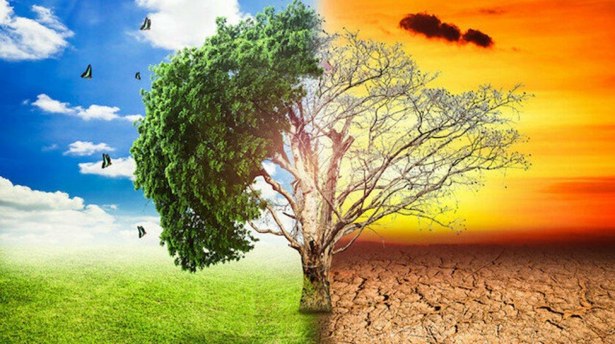 Dünyada ısı ölümlerinin yüzde 37 si iklim değişikliği kaynaklı #1