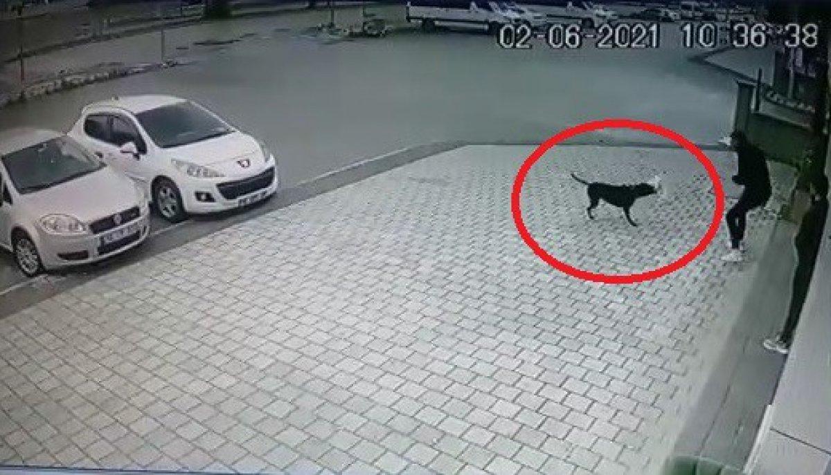 Bursa da küçük köpeğe pitbull saldırdı #2