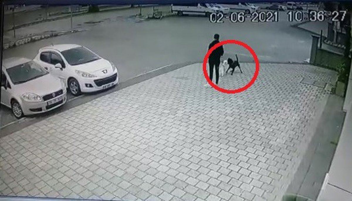 Bursa da küçük köpeğe pitbull saldırdı #1