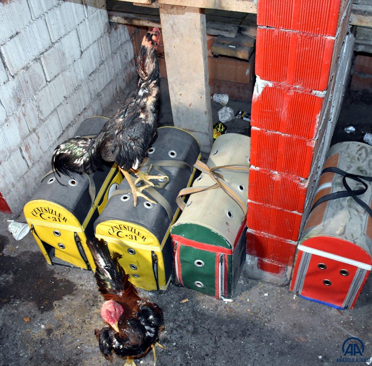 Kırıkkale de horoz dövüştüren 69 kişiye 431 bin 250 lira cezası #4