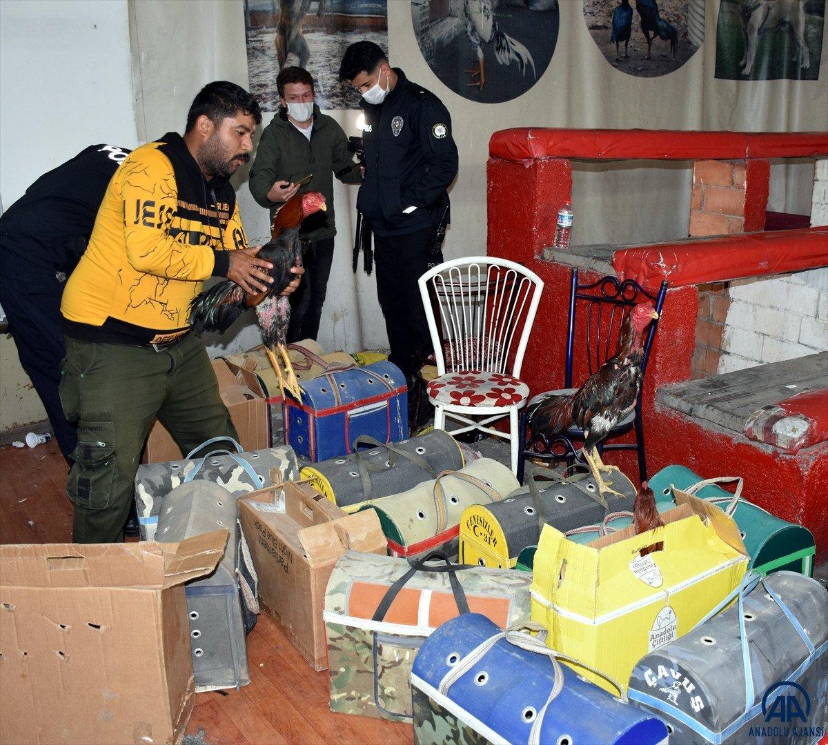 Kırıkkale de horoz dövüştüren 69 kişiye 431 bin 250 lira cezası #6