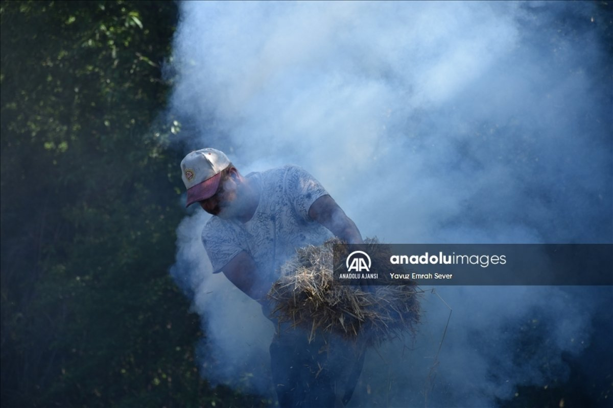 Bilecik te meşe odunlarını mangal kömürüne dönüştürüyorlar #8