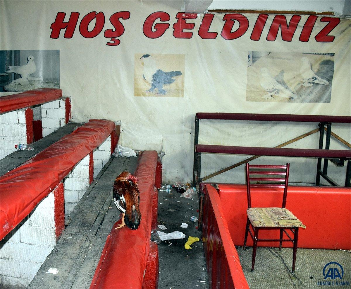 Kırıkkale de horoz dövüştüren 69 kişiye 431 bin 250 lira cezası #7