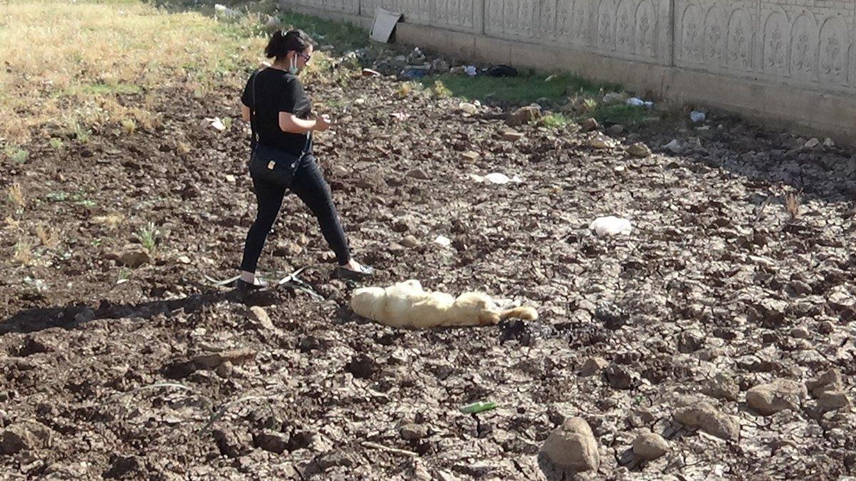 Diyarbakır'da bir köpek vahşice öldürüldü #1