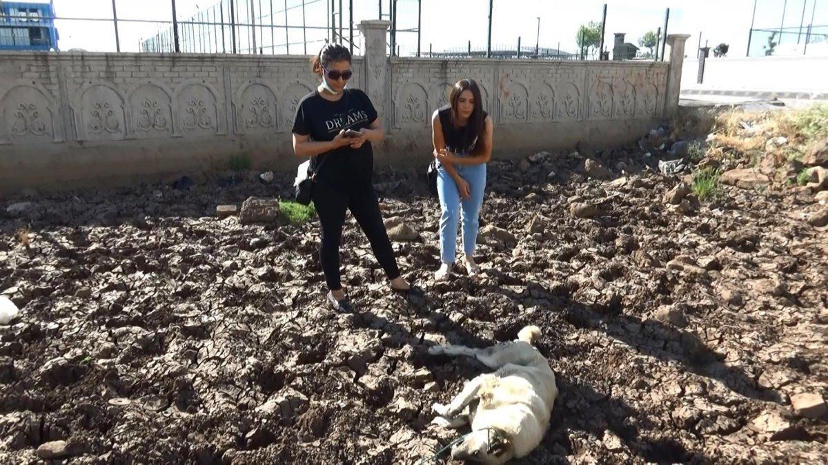 Diyarbakır'da bir köpek vahşice öldürüldü #3