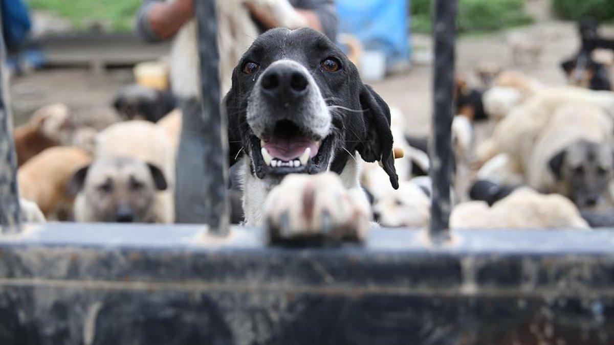 Hayvan Hakları Yasası nda sona gelindi #1