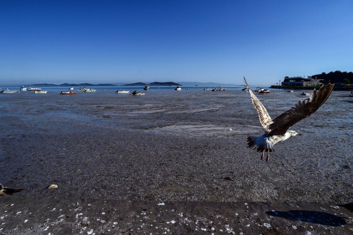 Marmara Denizi ndeki müsilaj belası havadan görüntülendi #7