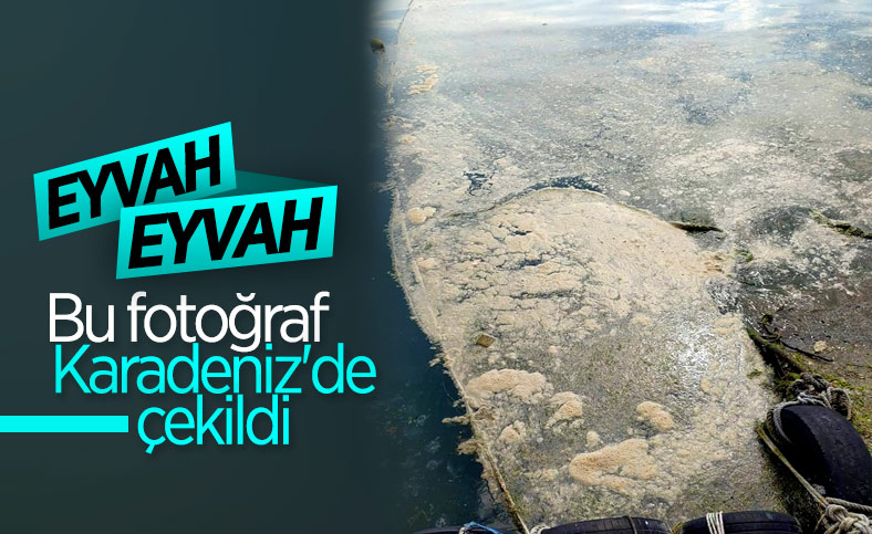 Karadeniz'de deniz salyası