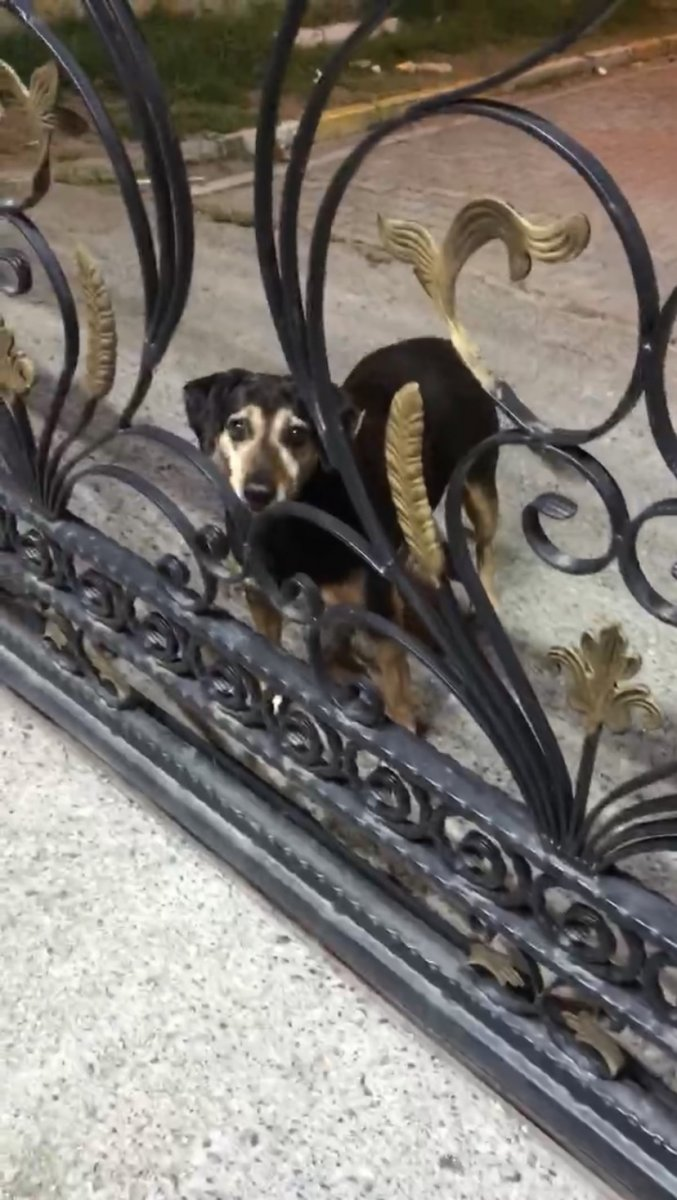 Eyüpsultan da taksi şoförü köpeği ezerek öldürdü #6