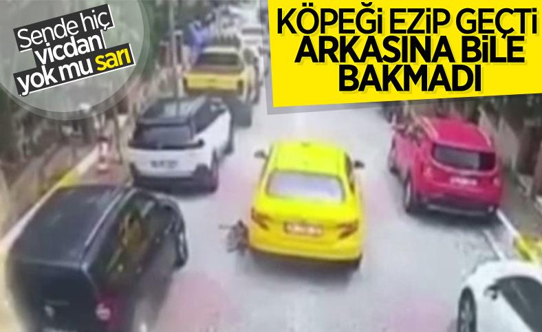 Eyüpsultan'da taksi şoförü köpeği ezerek öldürdü