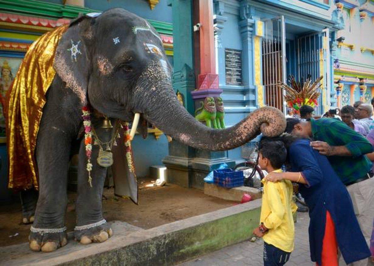 Vakanüvis yazdı: Hayvan hakları yasası hazırlanırken... #9
