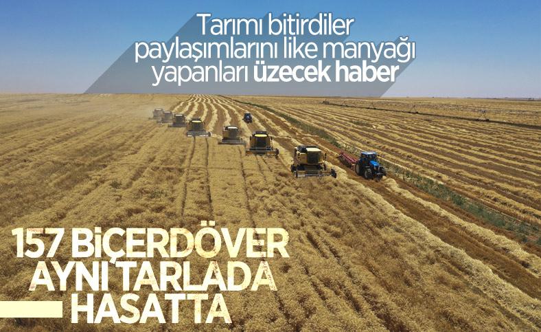 Türkiye'nin en büyük işletmesinde yerli tohumluk buğdayın hasadı