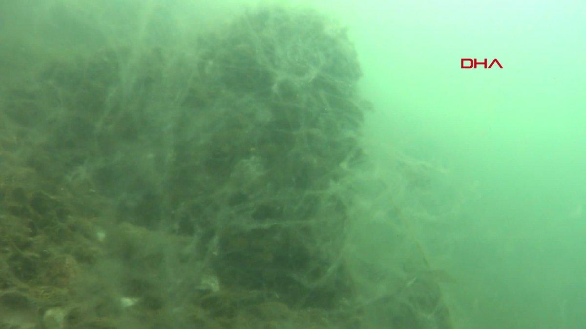 Kocaeli de müsilajın denizaltındaki tahribatı görüntülendi  #2