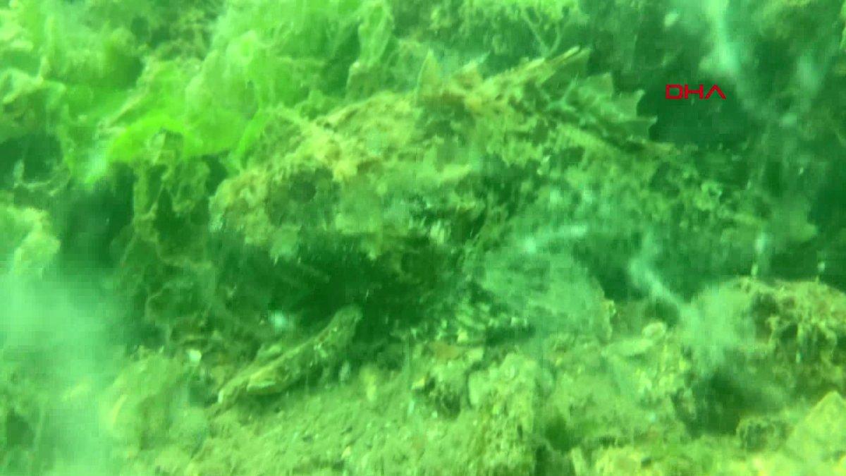 Kocaeli de müsilajın denizaltındaki tahribatı görüntülendi  #6