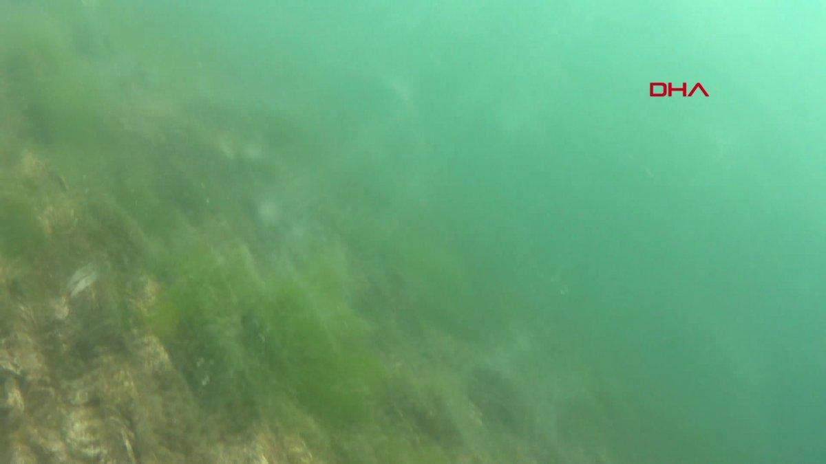 Kocaeli de müsilajın denizaltındaki tahribatı görüntülendi  #5