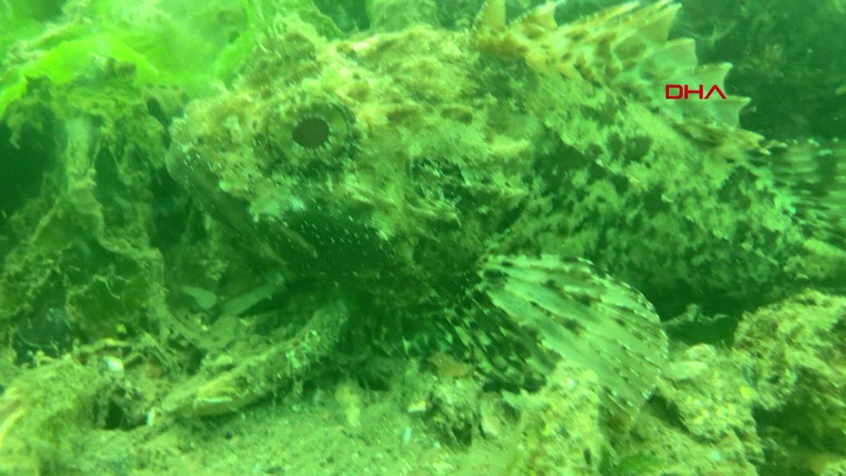 Kocaeli de müsilajın denizaltındaki tahribatı görüntülendi  #3