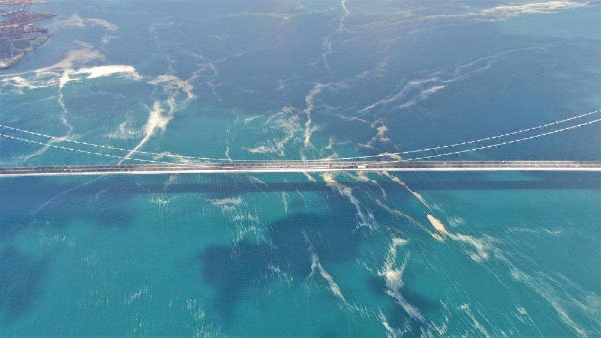 Osmangazi Köprüsü'nün etrafını deniz salyası sardı #2