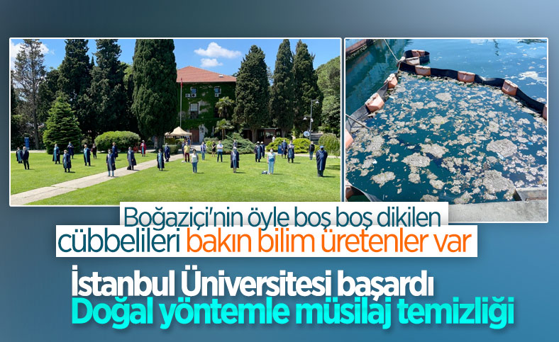İstanbul Üniversitesi'nden müsilaj çözümü: Deniz bakteri izolatları